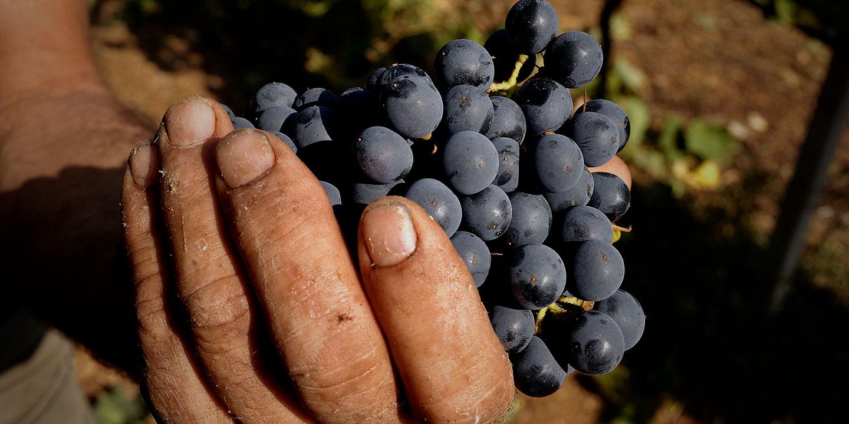 Dal lavoro dell'uomo nascono i nostri vini - Tenute Delogu